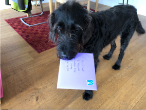 Scruffy black dog with letter in its mouth