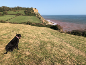 Dog on coast path overlooking sea