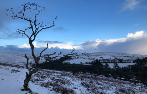 snowy scene on dartmoor